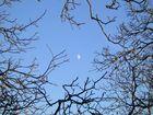 La luna ciglionese