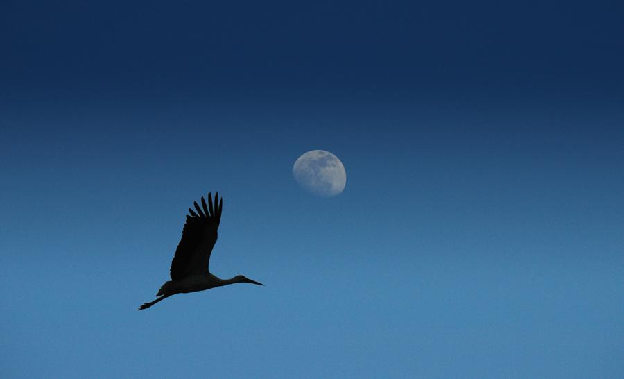 La luna e la cicogna