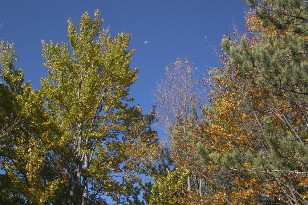 la luna nell'autunno...