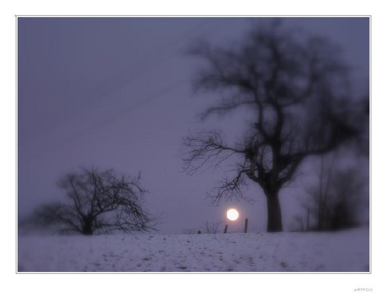 la lune et l'arbre