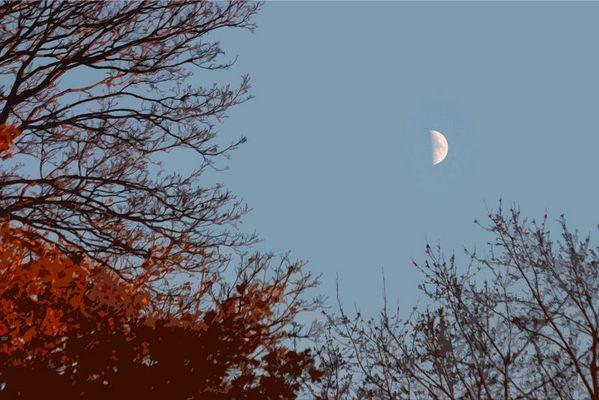 La Lune Ne Cache Rien