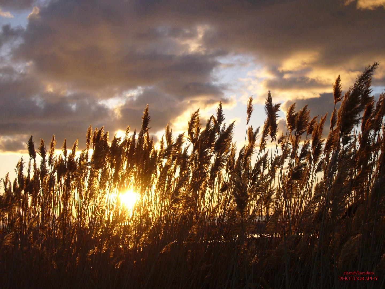 La luz del trigo