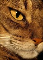 La Madre del Puma ....