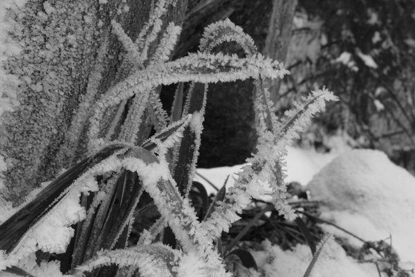 la magie de l'hiver