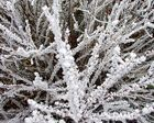 La magie des fleurs glacées 1 - '7'