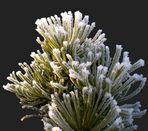 La magie des fleurs glacées 2 - '7'