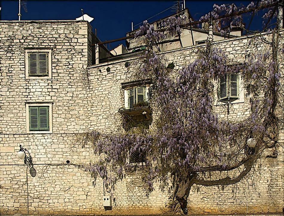 La maison avec la glycine .... Das Haus mit dem Blauregen ...