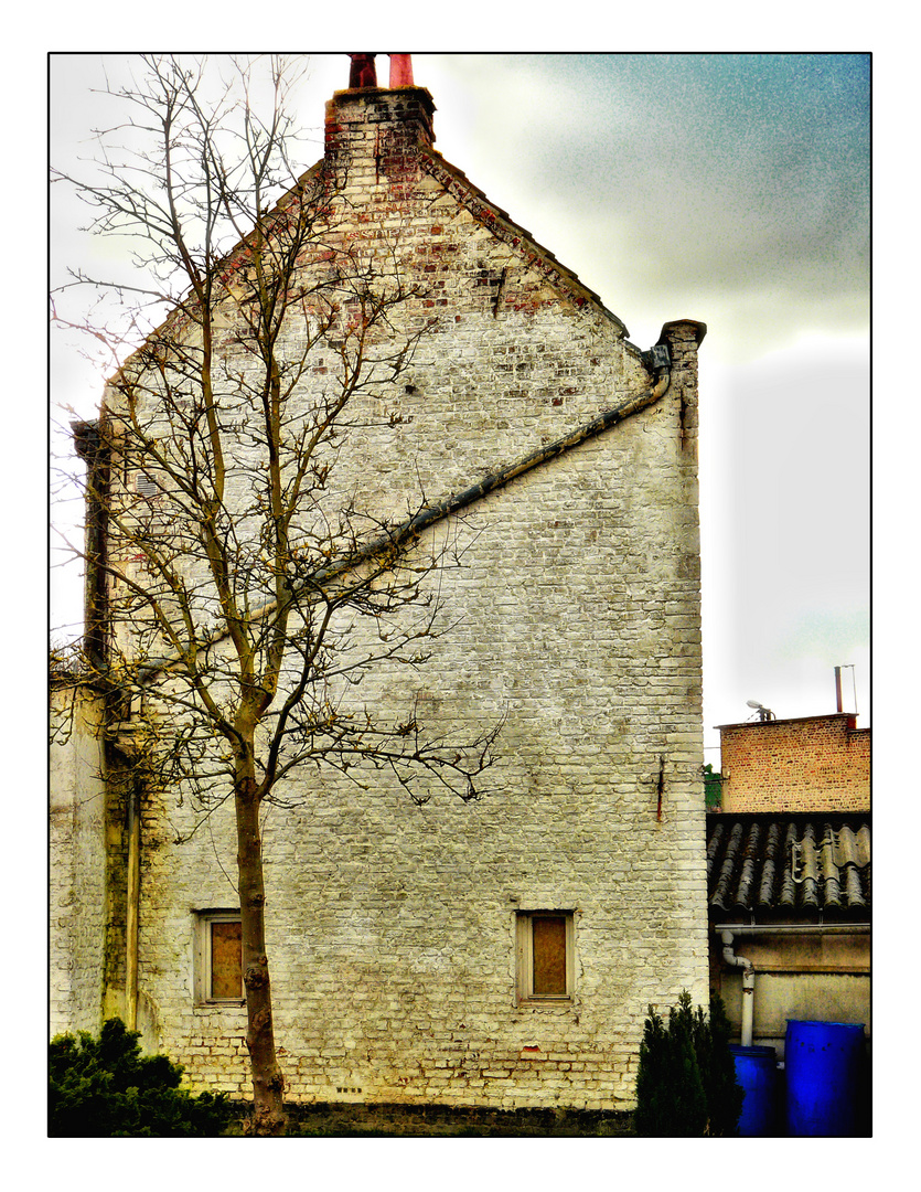La maison blanche et l'arbre