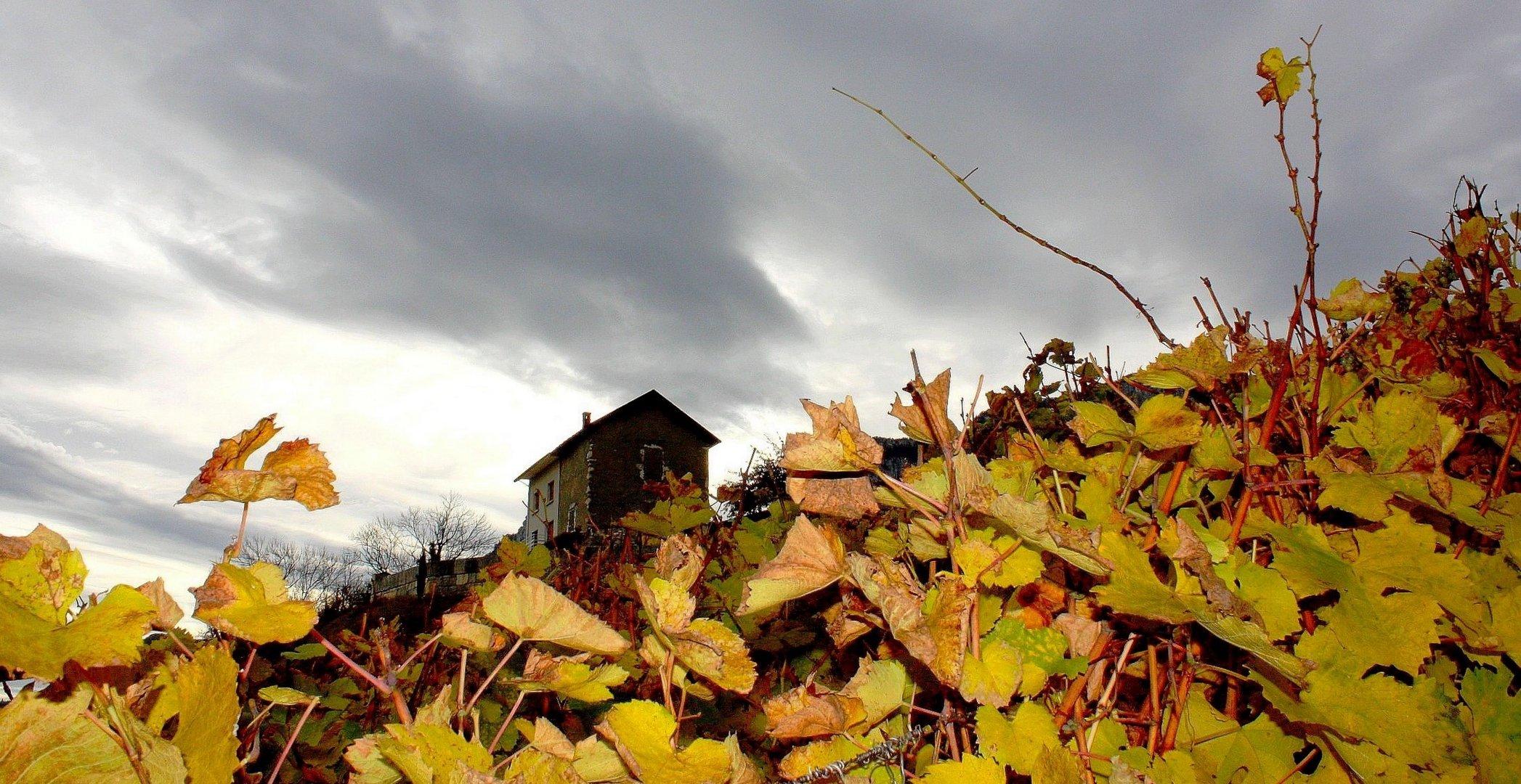 La maison dans les vignes Savoie