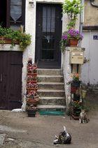 la maison des chats, Auxerre