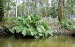 """La """"mangrove landaise"""".... 3"""