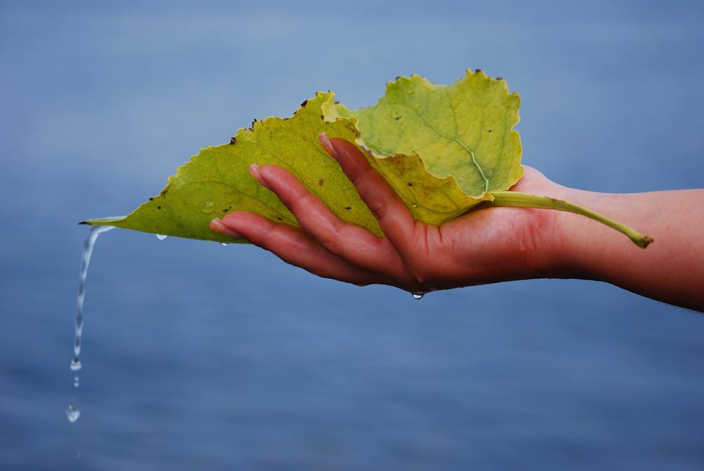 La mano della natura
