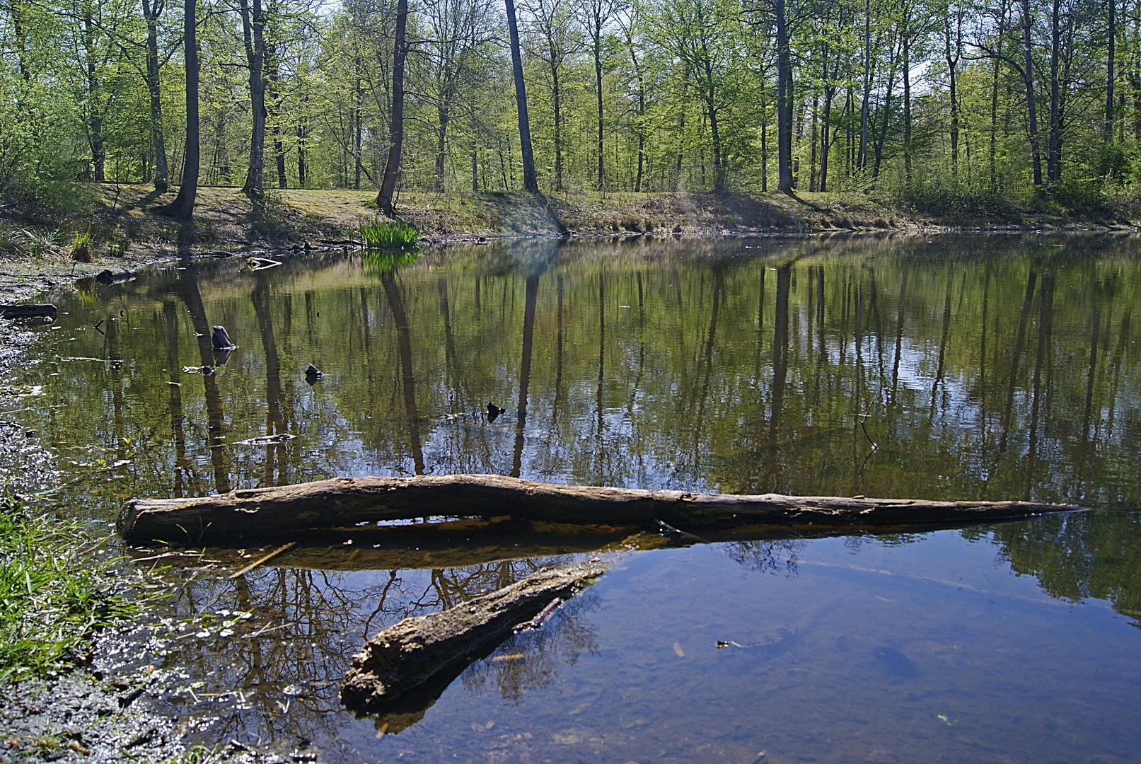 la mare aux évées, forêt de fontainebleau