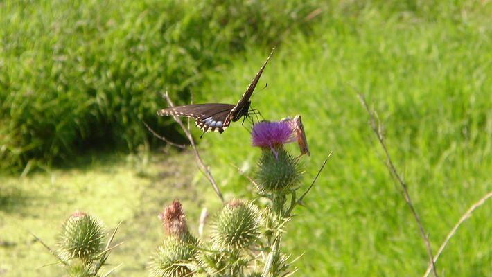 La Mariposa y El Saltamontes