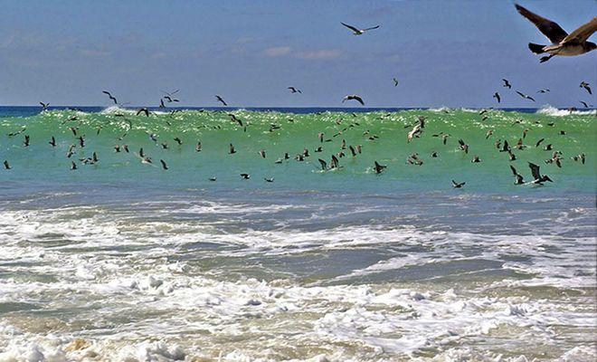 la mer et les oiseaux