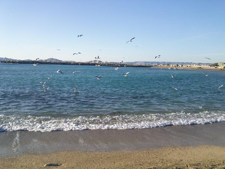 La mer et ses mouettes