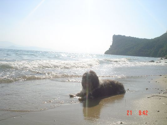la mia cagnolina in riva al lago
