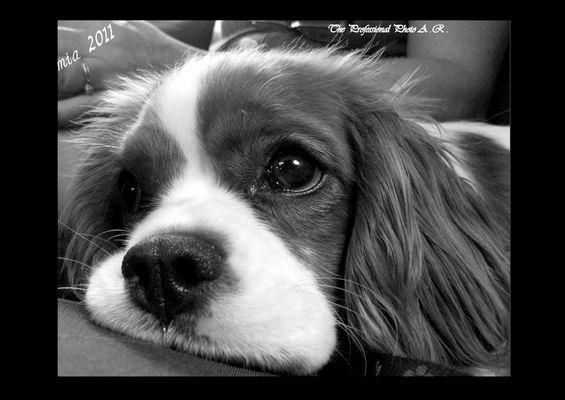 La mia dolce Daisy