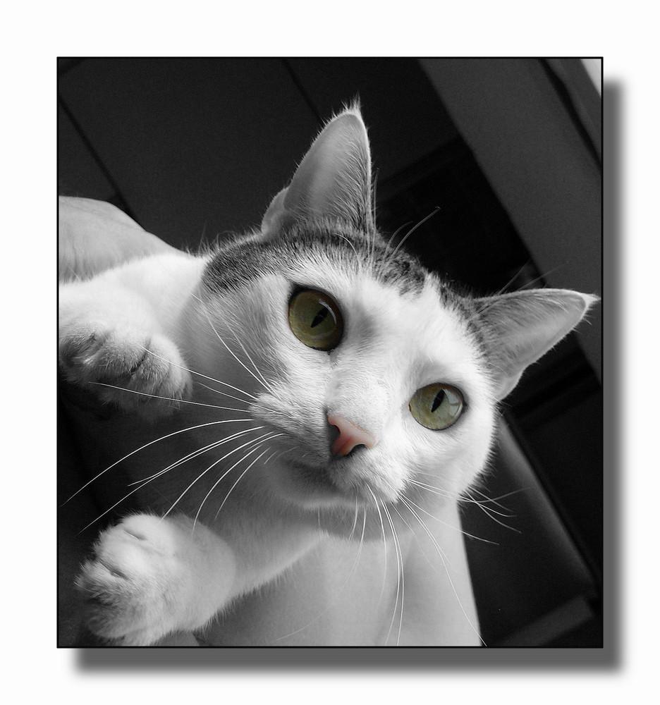 La mia gattina Maya..