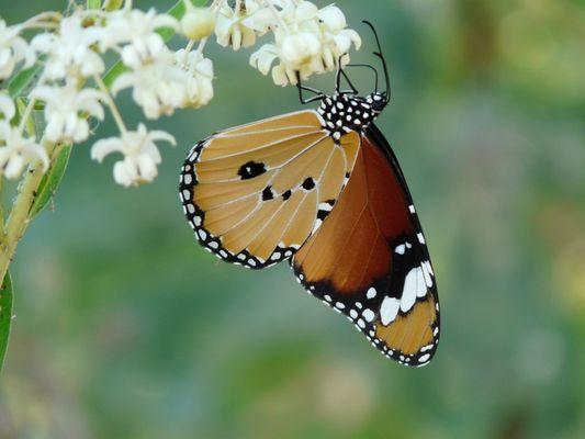 La mia prima bella farfalla