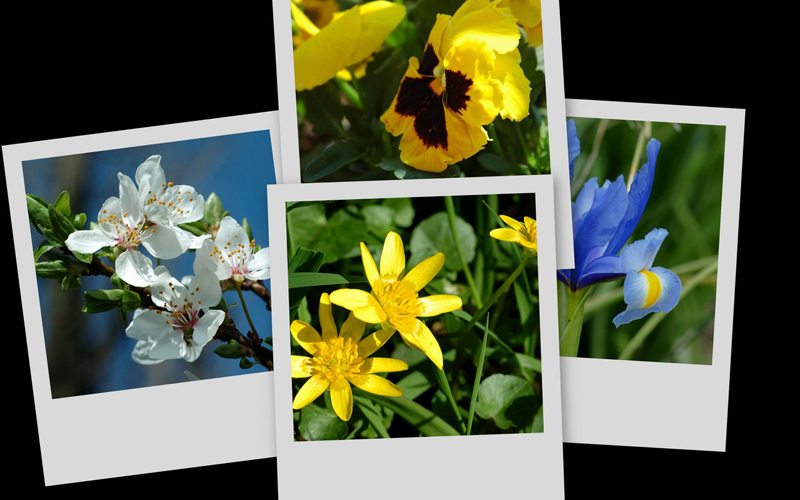 La mia primavera....riassunto
