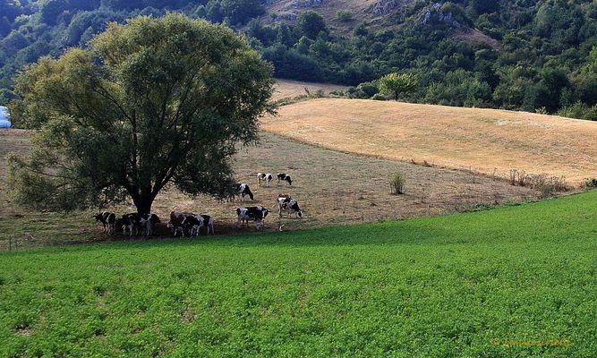 La mia Terra, Terra di Calabria