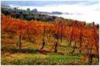 La mia Toscana..............