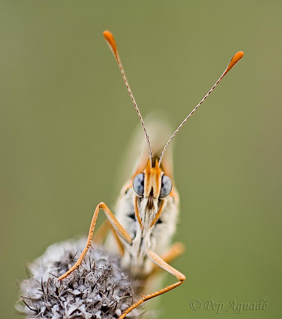 La Mirada de la papallona