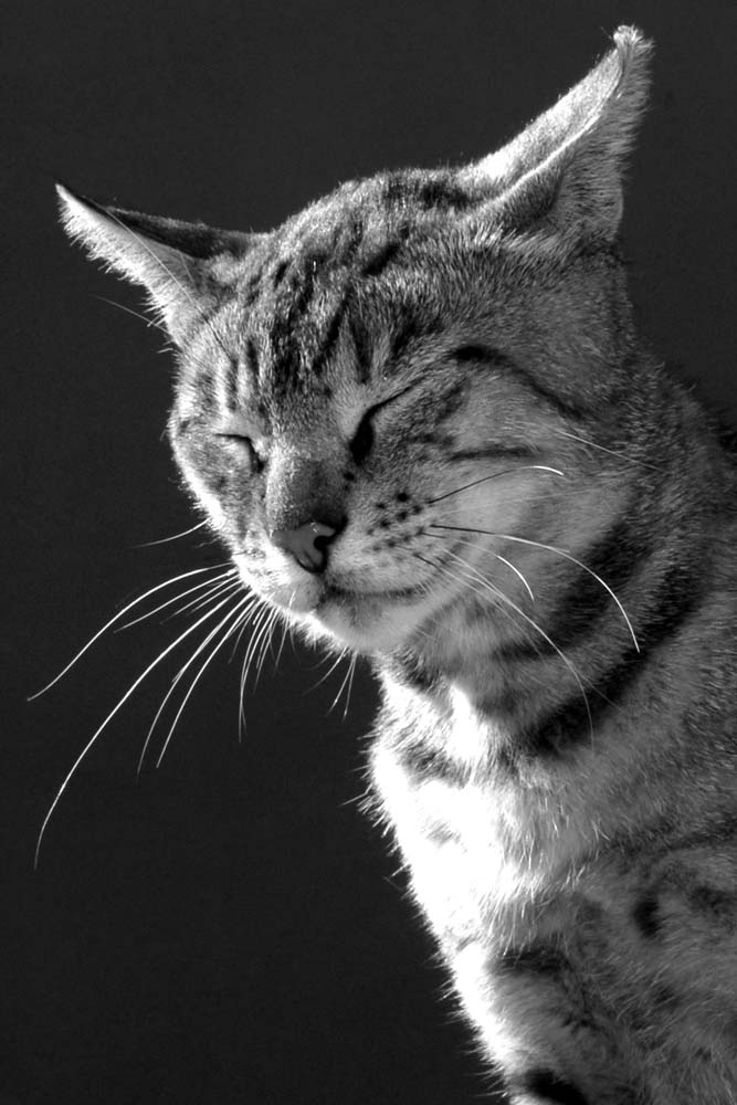 La mirada del gato
