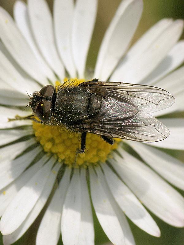 """la mosca"""