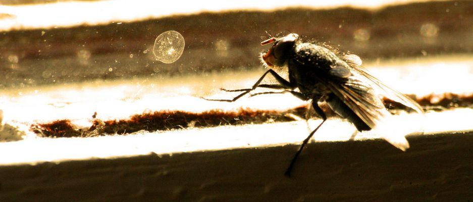 La mouche cherche une autre sortie