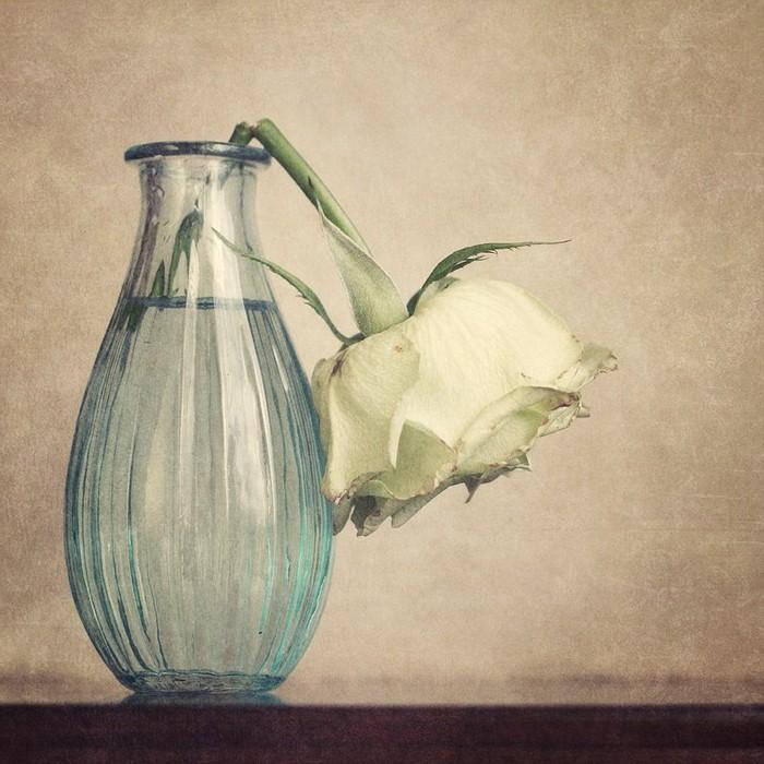 La muerte de una rosa