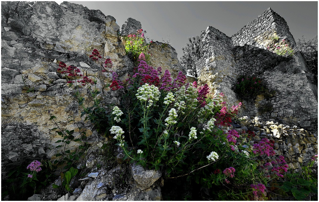 La muraille fleurie