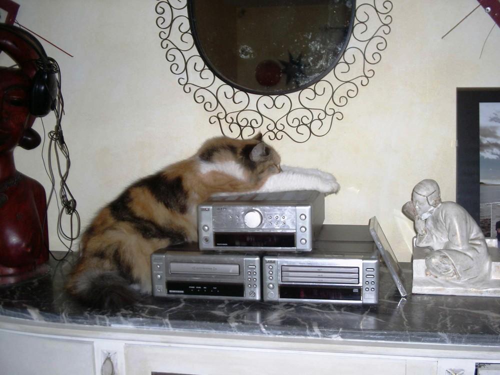 La musique elle aime!!