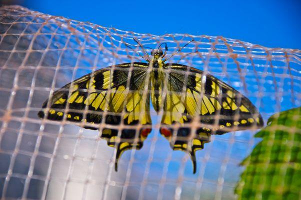 la natura chiusa in gabbia