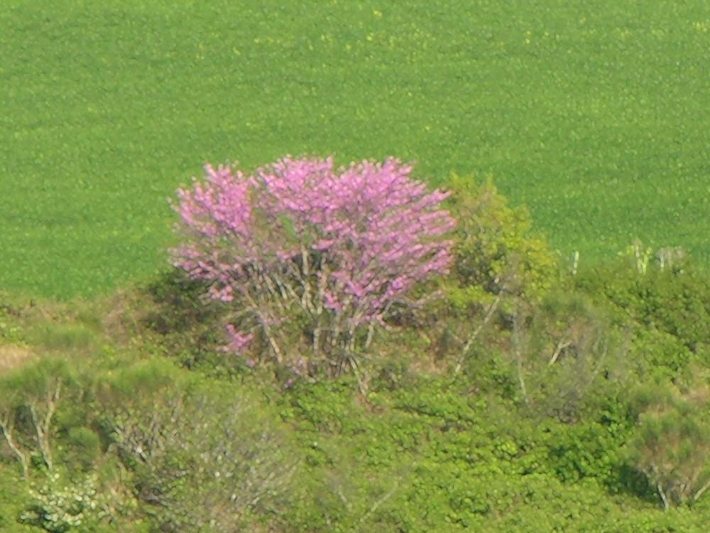 La natura dosa i suoi colori...