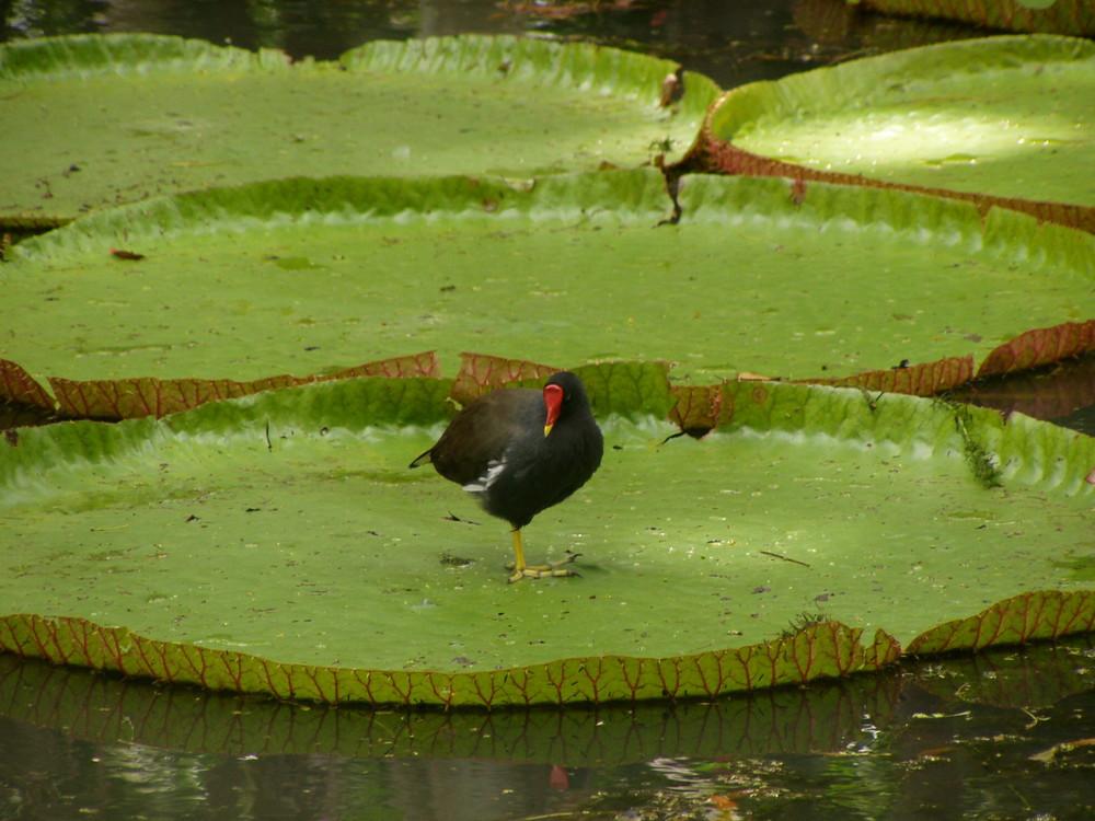 La natura, splendore e leggerezza