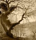 La naturaleza- Año 1.962
