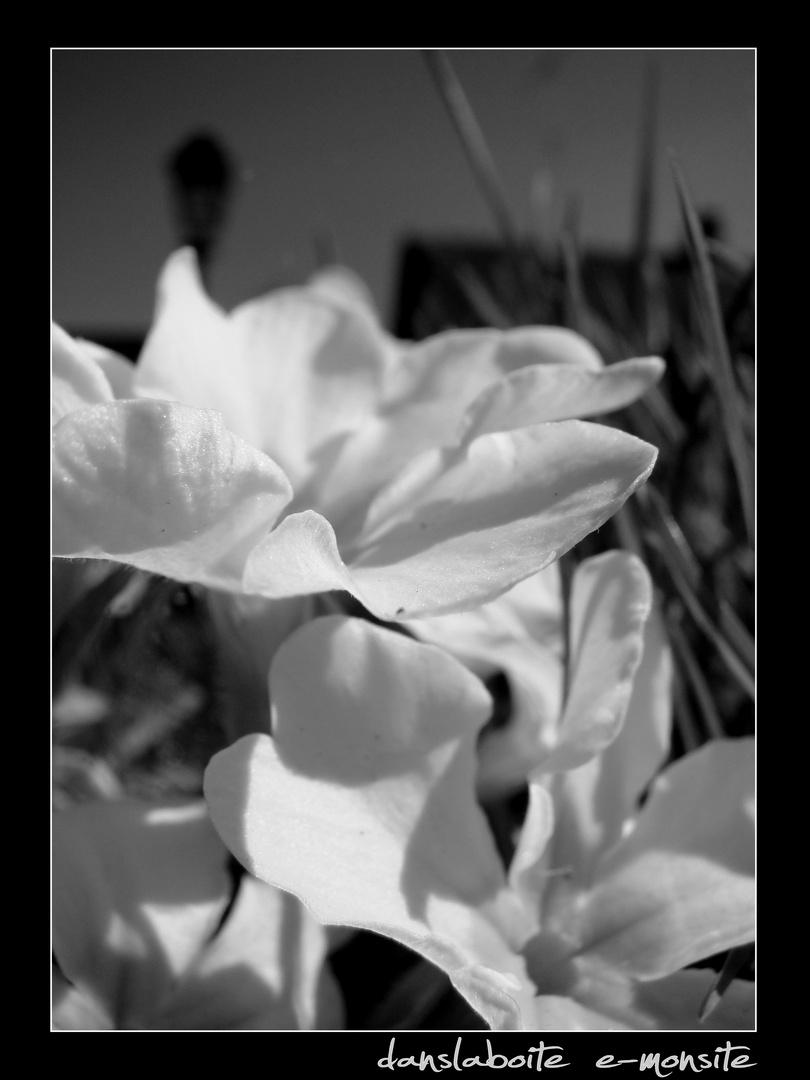La nature aime aussi le noir et blanc