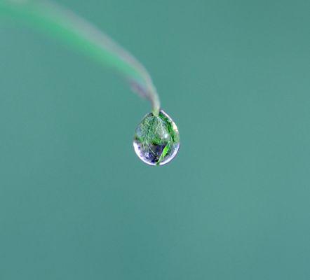 la nature dans une goutte d'eau