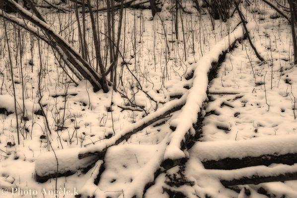 La nature en neige ! ! !