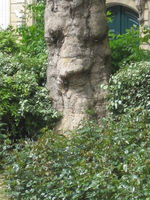 La nature nous regarde
