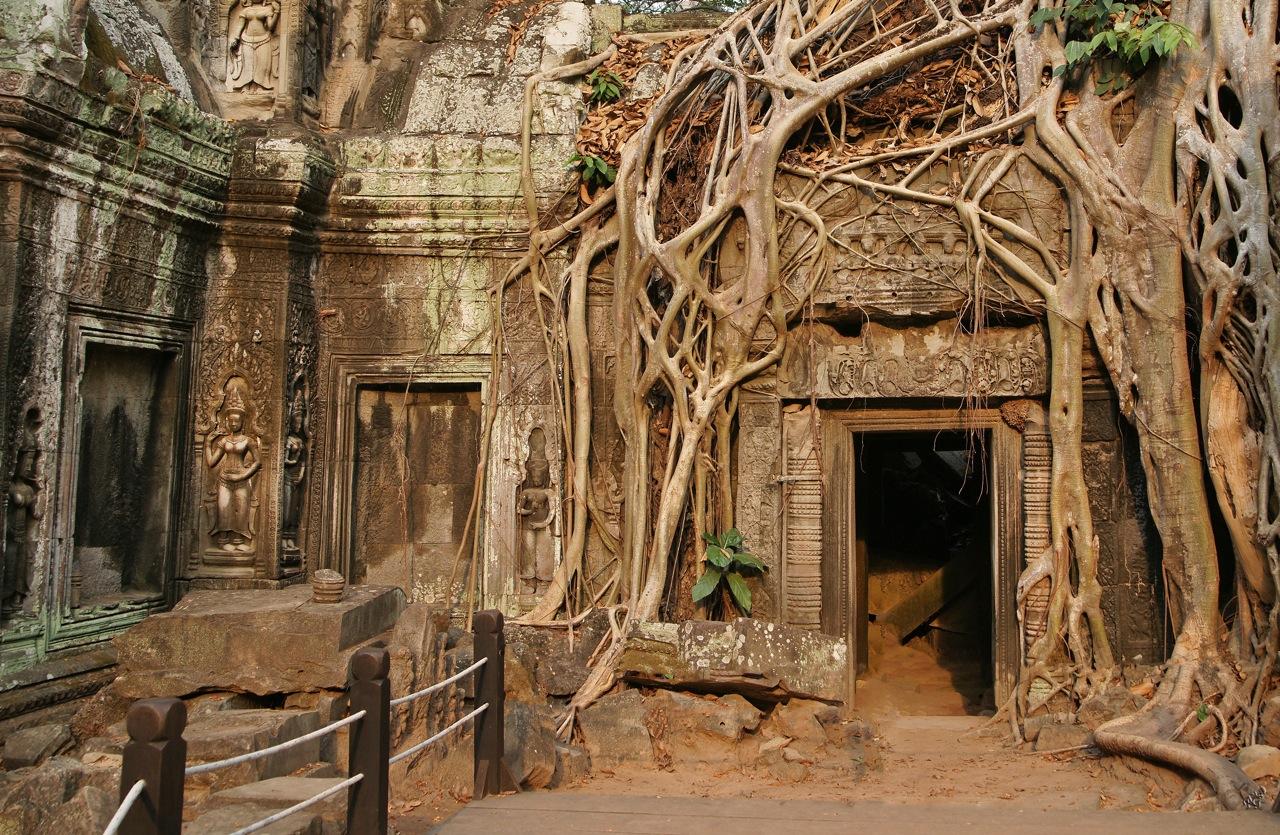 la nature reprend ses droits photo et image asia cambodia southeast asia images. Black Bedroom Furniture Sets. Home Design Ideas