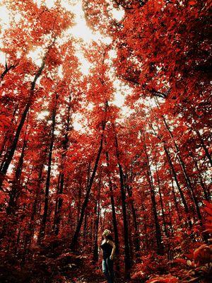 « La Nature surpasse l'Homme. »