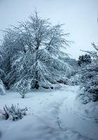 La neige au jardin.