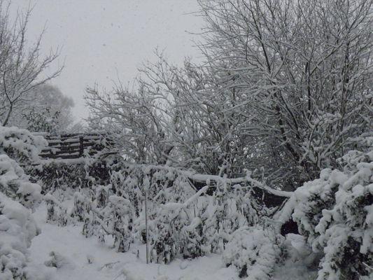 La Neige dans le jardin,Cabourg Décembre 2010