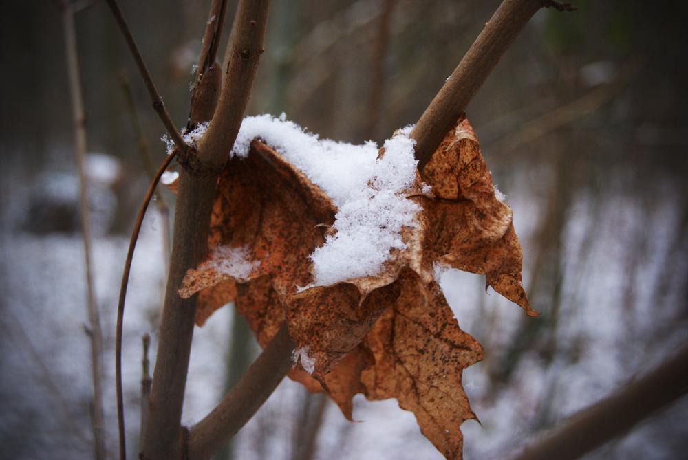 La neige et arriver