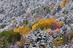 La neige et l'automne