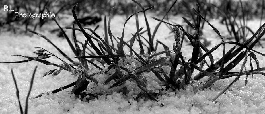 la neige recouvre la surface, dont les plantes ...