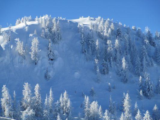 La neve bianca che copre gli alberi